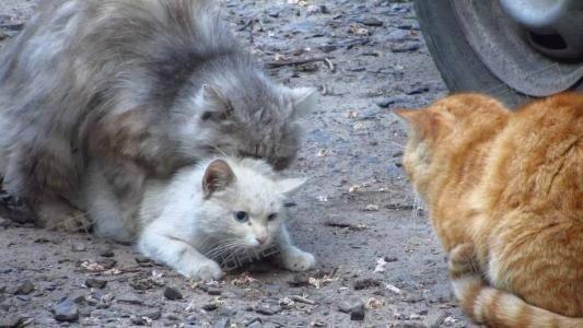 猫咪冬天也会发情吗?